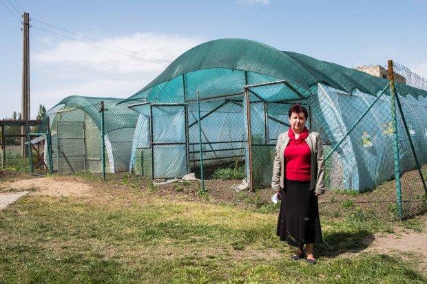 Учні на Запоріжжі вирощують овочі для їдальні в шкільних теплицях